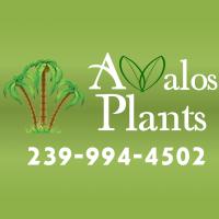 Logo Avalos Plants & Landscaping
