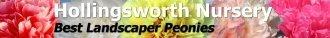 Logo tuincentrum Hollingsworth Nursery