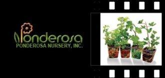 Logo tuincentrum Ponderosa Nursery