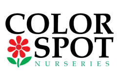 Logo tuincentrum Color Spot Nurseries
