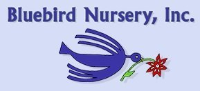 Logo tuincentrum Bluebird Nursery